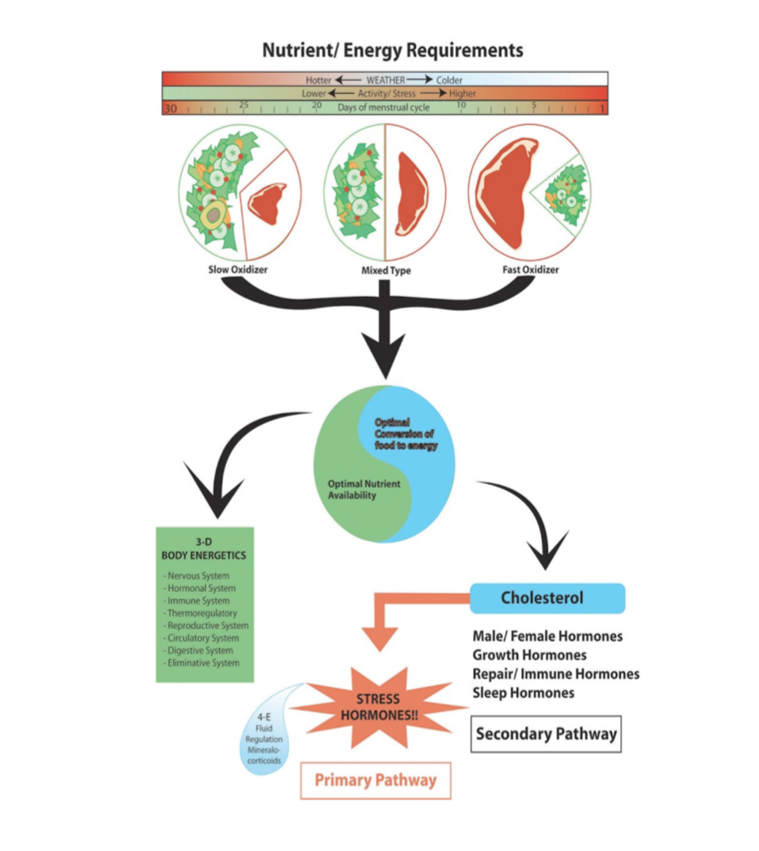 Metabolic Typing nutrition for a balanced diet