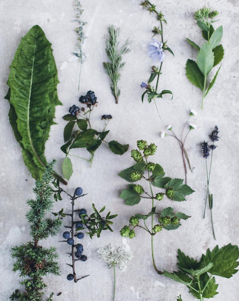 CBD Healing Plants + oils Botanical Magic