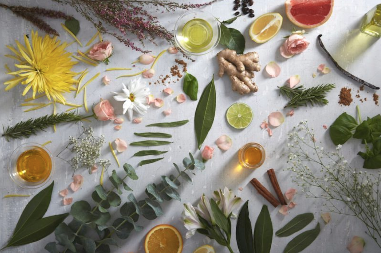 CBD oil healing plants